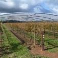 Vineyard shelter